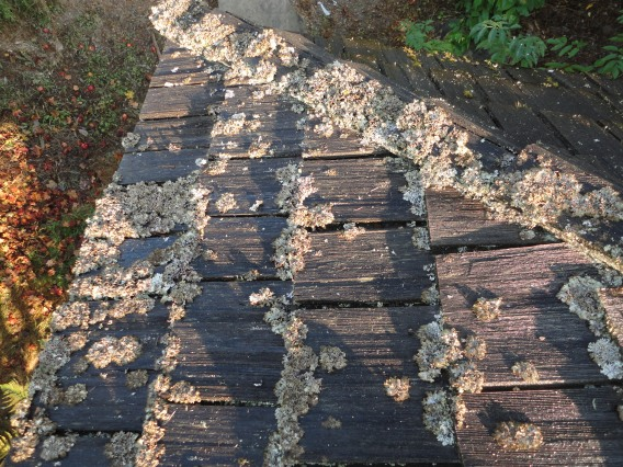 Lichen-on-Cedar-Roofing-Seattle