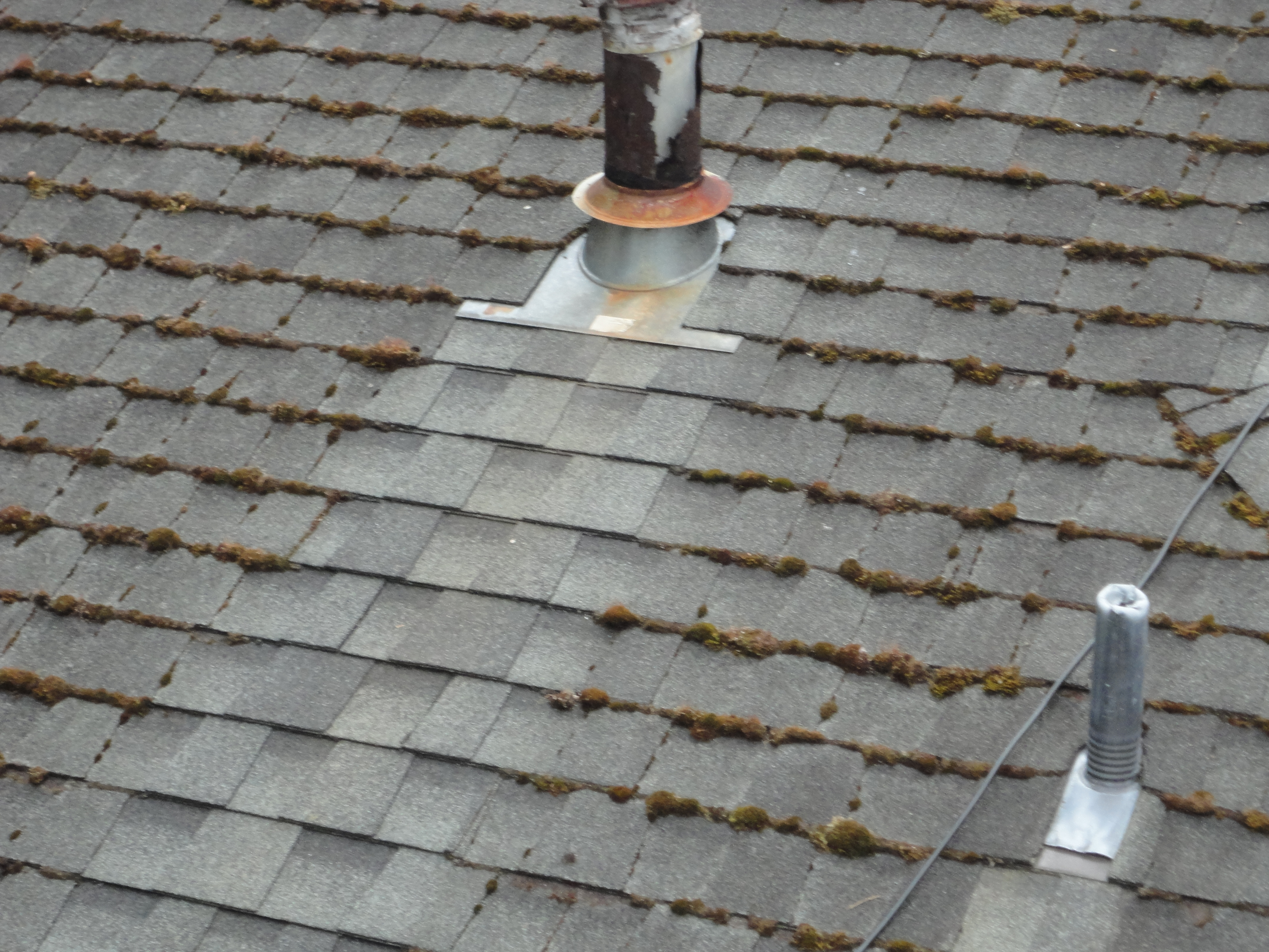 Zinc Strips Seattle Roof Cleaning