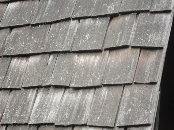 grey cedar shakes